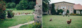 Hühner laufen über die Wiese vor dem Haupthaus, Kulturgut Wrechen.
