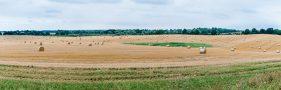Weites Feld mit Rundballen. Landschaftsaufnahme