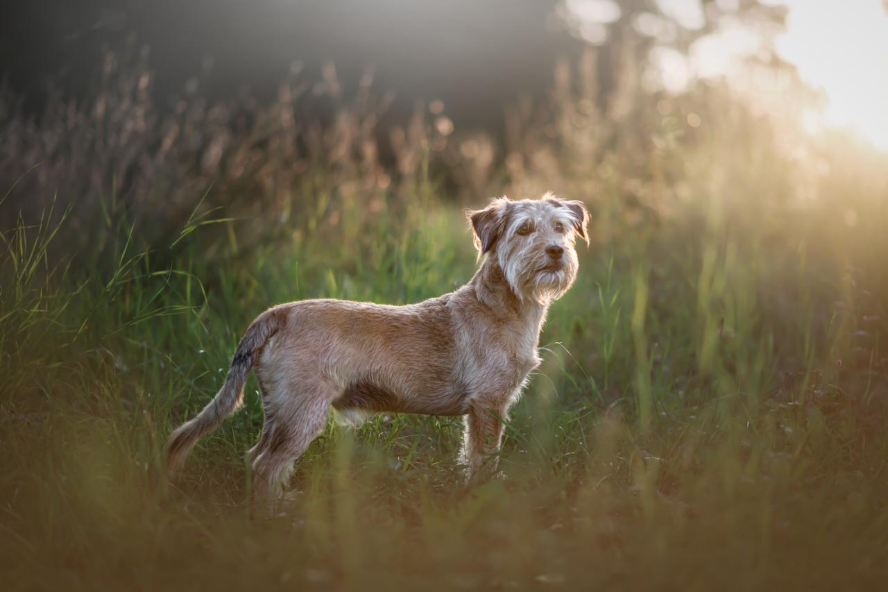 Filitz-Fotografie-Hundeshooting-Luebeck-1