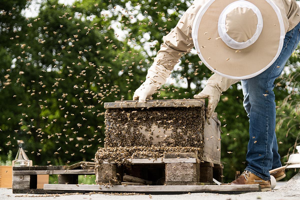 Honigbienen-und-Imker-Filitz-Fotografie-1