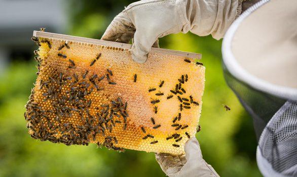 Wunder der Natur - die Bienen