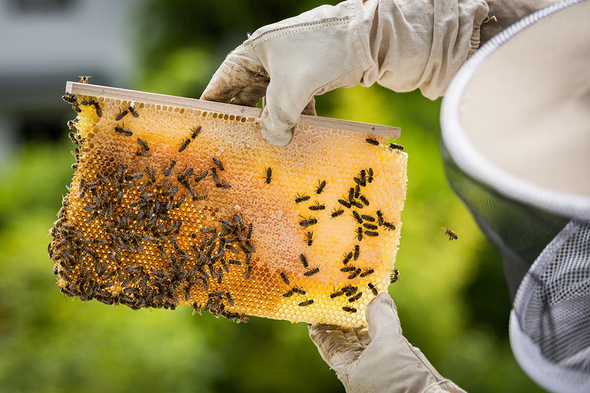Honigbienen-und-Imker-Filitz-Fotografie-3