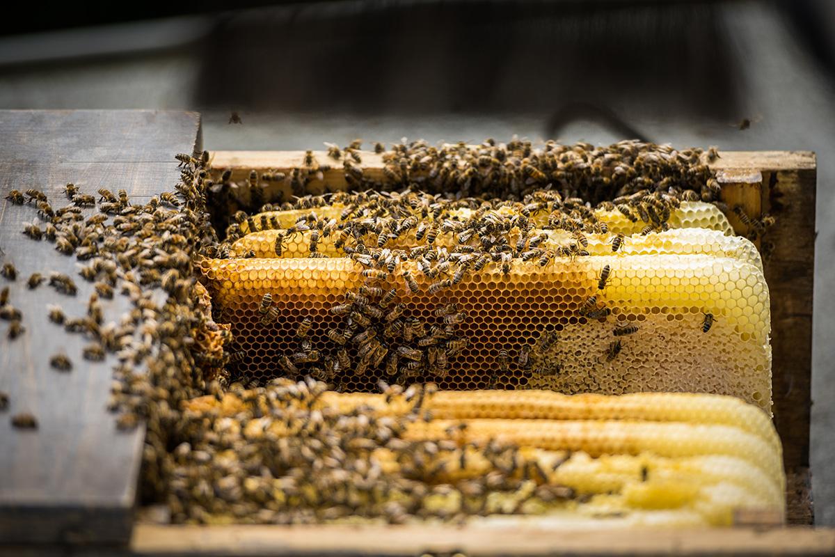 Honigbienen-und-Imker-Filitz-Fotografie-4