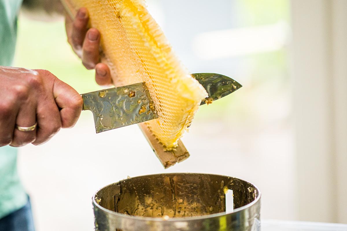 Honigbienen-und-Imker-Filitz-Fotografie-7