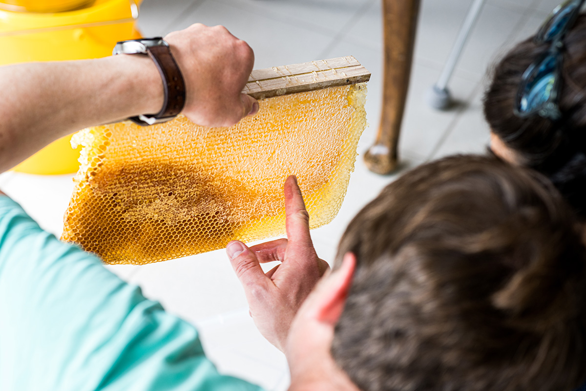 Honigbienen-und-Imker-Filitz-Fotografie-8